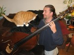 Cats and basses