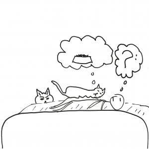 Angel (sweet girl cat) sleeping calmly on daddy, us both lost in dreamland.